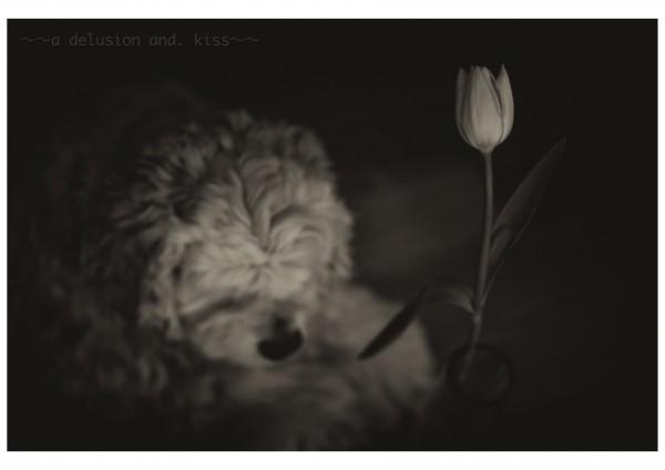 Leica M Monochrom, DR Summicron 50mm f2.0