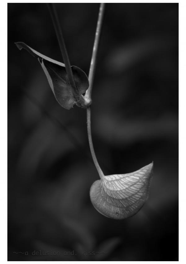 Leica M Monochrom, ELMAR 65mm f3.5, Visoflex Ⅲ